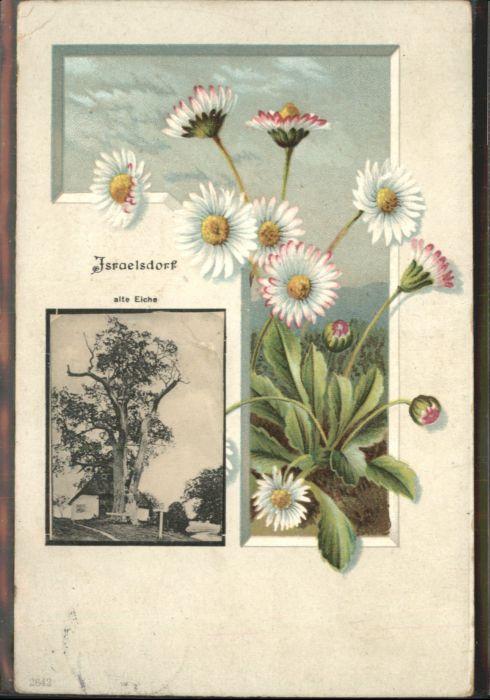 Israelsdorf Eiche Blumen x