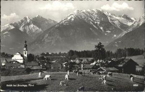 Reith Brixlegg Kuehe / Brixlegg /Tiroler Unterland