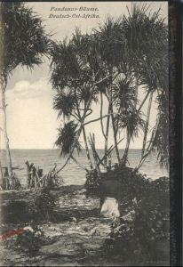 Deutsch-Ostafrika Pandanus Baeume / Deutsch-Ostafrika /