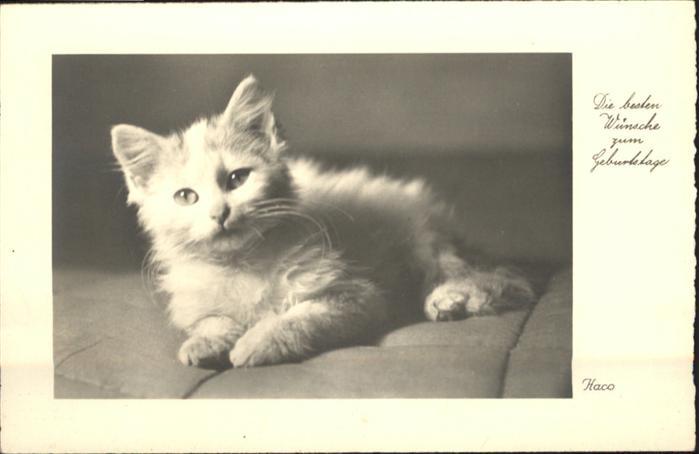 Katzen Geburtstag Tiere Nr Wf46865 Oldthing Ansichtskarten
