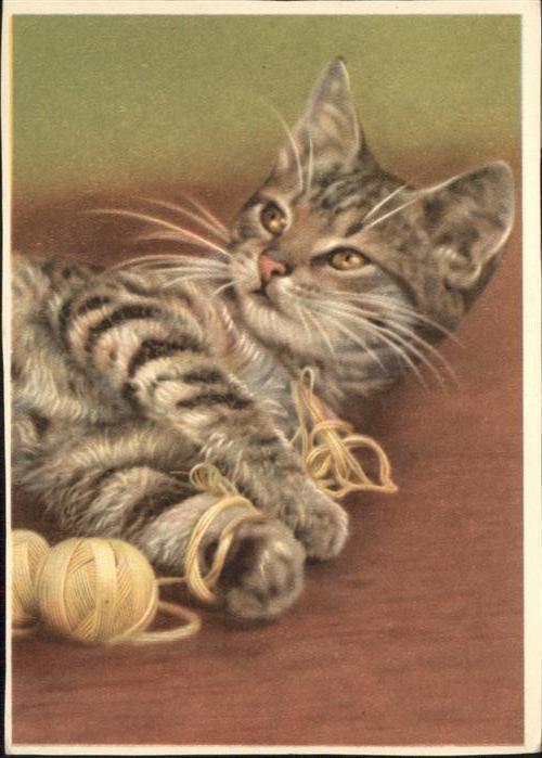 Katzen Wolle Spielen / Tiere /
