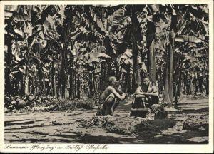 Deutsch-Ostafrika Bananen Pflanzung / Deutsch-Ostafrika /
