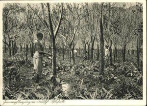 Deutsch-Ostafrika Gummipflanzung / Deutsch-Ostafrika /