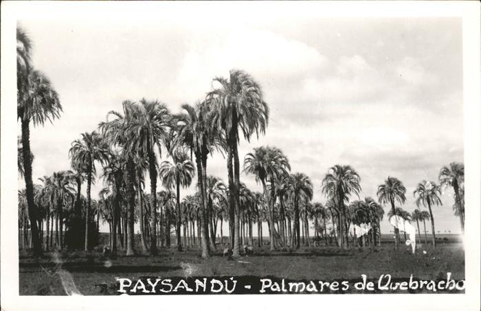 Paysandu Palmares  / Paysandu /