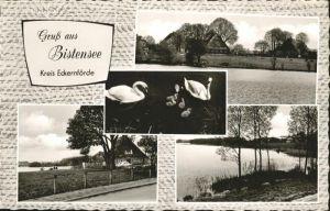 Bistensee Schwan / Bistensee /Rendsburg-Eckernfoerde LKR