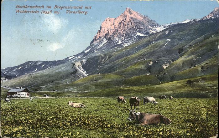 Hochkrumbach Widderstein Kuehe / Warth Vorarlberg /Bludenz-Bregenzer Wald