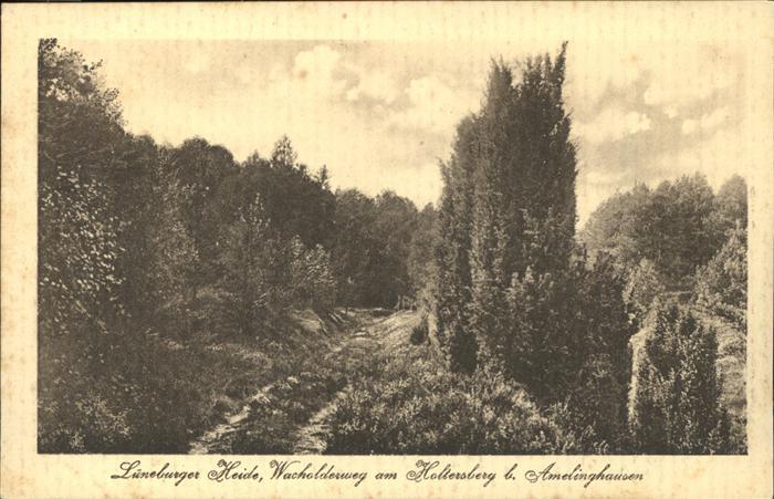 Amelinghausen Lueneburger Heide Wacholderweg am Holtersberg Kat. Amelinghausen