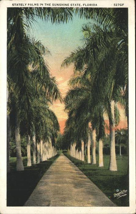 Florida Stately Palms in the Sunshine State Kat. Florida