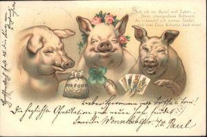 Schweine  / Tiere /