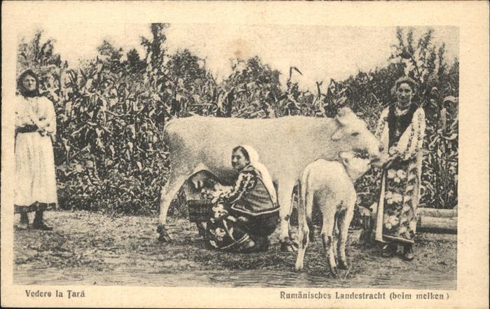 Trachten Rumaenien Kuehe melken Kat. Trachten