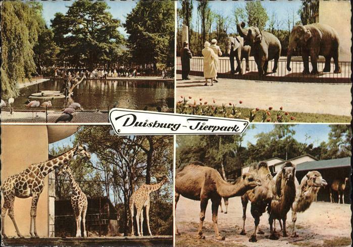Zoo Duisburg Elefanten Giraffen Kamele Kat. Tiere
