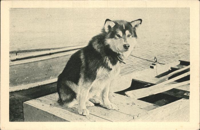 Hunde Spat Chien Mary s Igloo Alaska Husky Kat. Tiere