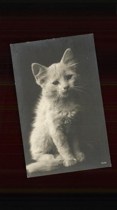 Katzen junge Katze Kat. Tiere