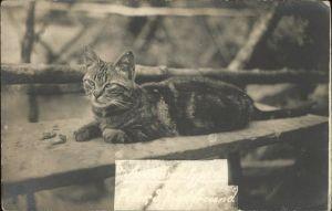 Katzen Getigerte Katze Argauerwald Kat. Tiere