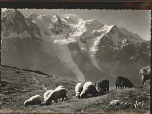 Chamonix La Chaine du Mont Blanc Schafe Kat. Chamonix Mont Blanc