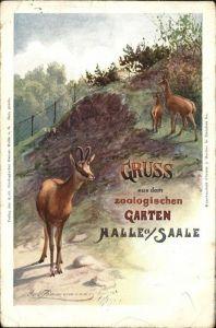 Halle Saale Zoologischer Garten Kuenstlerkarte Kat. Halle