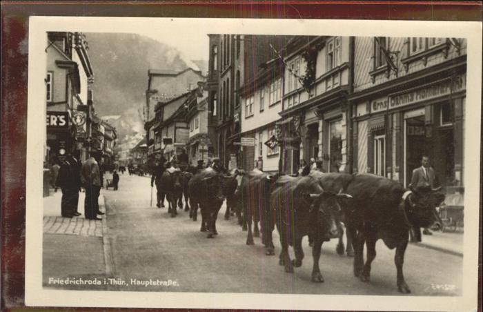 Friedrichroda Kuhherde in der Hauptstrasse beim Gang zur Weide im Leinatal Kat. Friedrichroda