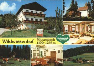 Miesenbach Birkfeld Gasthof Pension Wildwiesenhof Urlaub auf dem Bauernhof Viehweide Kuh Kat. Miesenbach bei Birkfeld