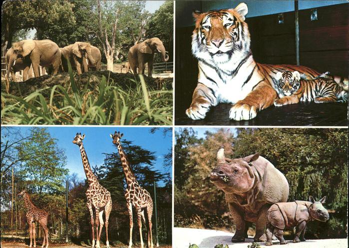 Zoo Basel Tiger Elefanten Panzernashorn Giraffen Kat. Tiere