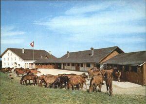 Le Roselet Pferdehof in den Freibergen Flagge Kat. Muriaux