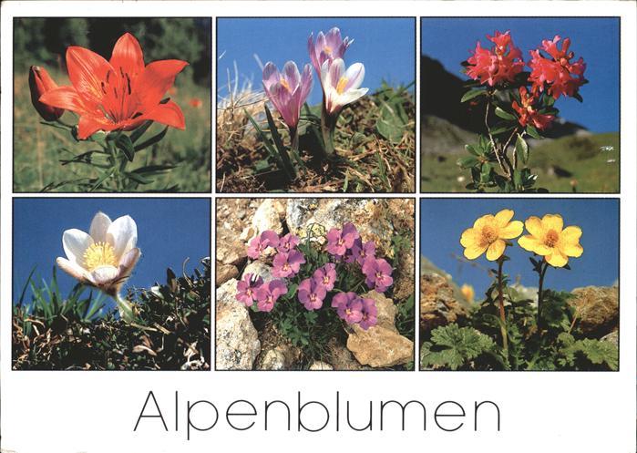 blumen alpen feuerlilie alpenrose pelzanemone kat pflanzen nr kk51797 oldthing pflanzen tiere. Black Bedroom Furniture Sets. Home Design Ideas