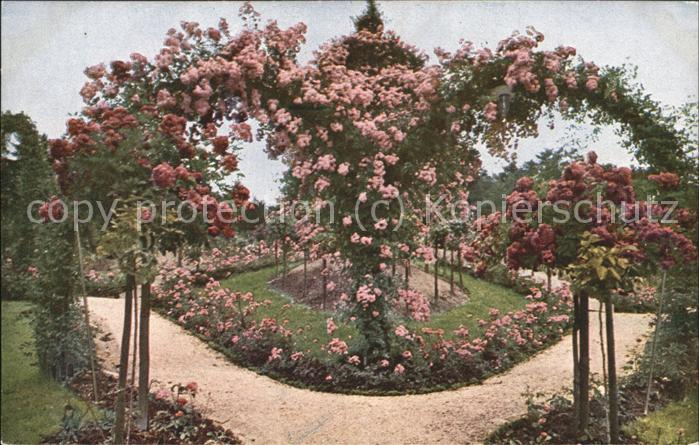 Fabelhaft Rosen Garten Spalier Herz Kat. Pflanzen Nr. hd06575 - oldthing @FC_79
