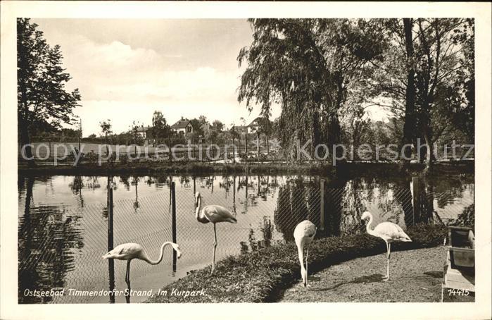 Timmendorfer Strand Kurpark Flamingos Kat. Timmendorfer Strand