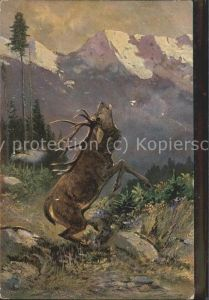 Hirsch Berge Tannen  / Tiere /