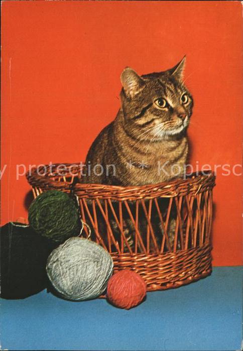 Katzen Baumwolle Kat. Tiere