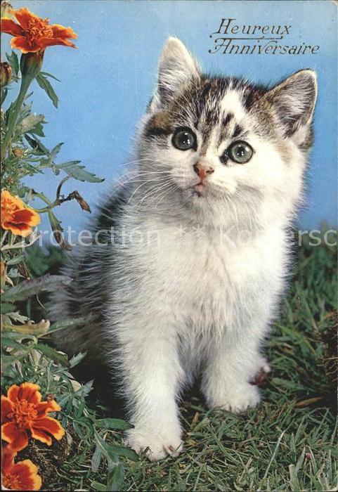 Katzen Glueckwunsch Geburtstag Kat Tiere Nr Kk78844 Oldthing