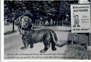 Buxtehude Buxtehude Hund * / Buxtehude /Stade LKR