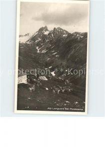 Pontresina Alp Languard Kuehe Kat. Pontresina