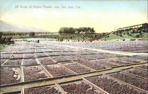 San Jose California Acres of Drying Prunes Kat. San Jose