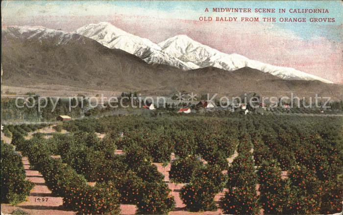 Los Angeles California Midwinter Scene Old Baldly from the Orange Groves Kat. Los Angeles