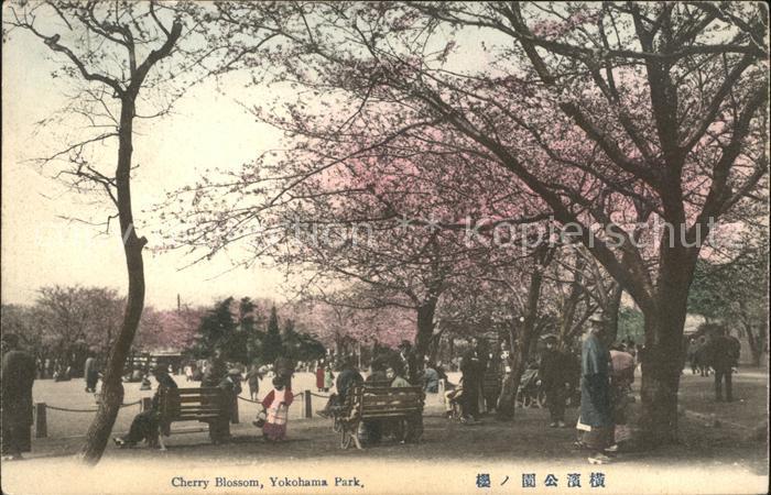 Yokohama Cherry Blossom Yokohama Park / Yokohama /