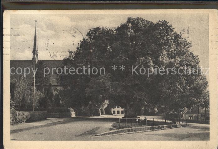 Bordesholm Linde und Kirche Kat. Bordesholm
