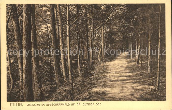 Eutin Waldweg Seeschaarwald Eutiner See Kat. Eutin
