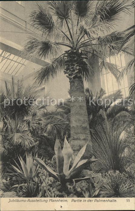 Gartenbau Mannheim mannheim palmenhalle int kunst und gartenbau ausstellung offzielle