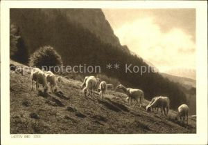 Igis Schafe auf der Alm Kat. Igis