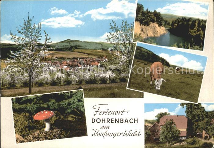 Dohrenbach Kuehe Pilz Kat. Witzenhausen