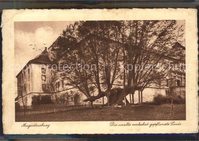 Augustusburg Verkehrt gepflanzte Linde Kat. Augustusburg