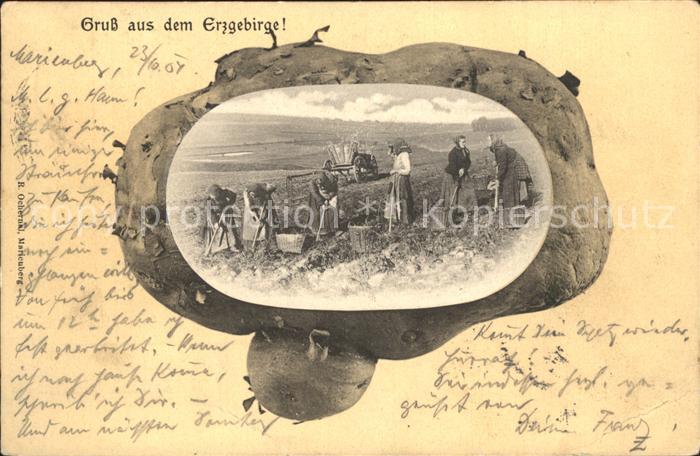 Marienberg Erzgebirge Kartoffelernte Landwirtschaft Kat. Marienberg