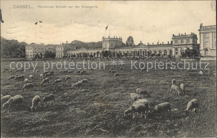 Cassel Kassel Weidende Schafe vor der Orangerie Kat. Kassel
