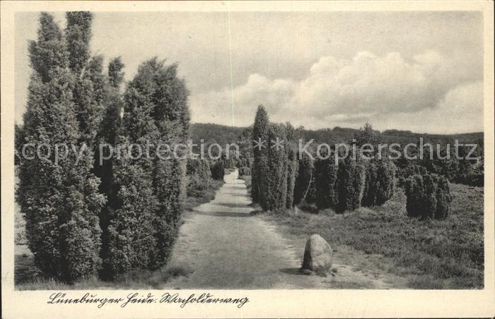 Lueneburger Heide Wacholderweg Kat. Walsrode