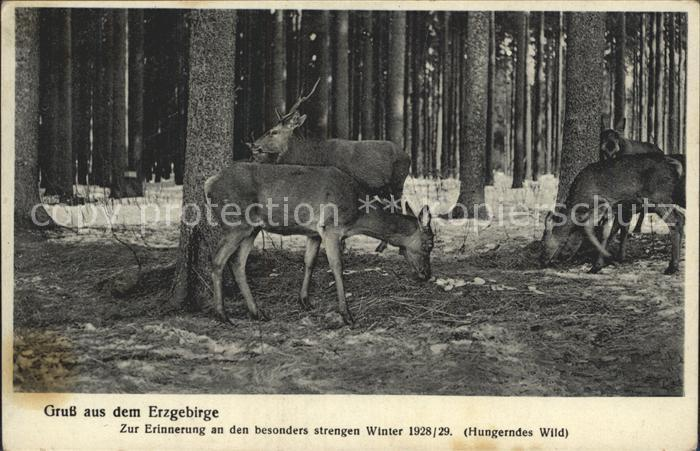 Erzgebirge Region Rotwild bei der Futtersuche Kat. Annaberg