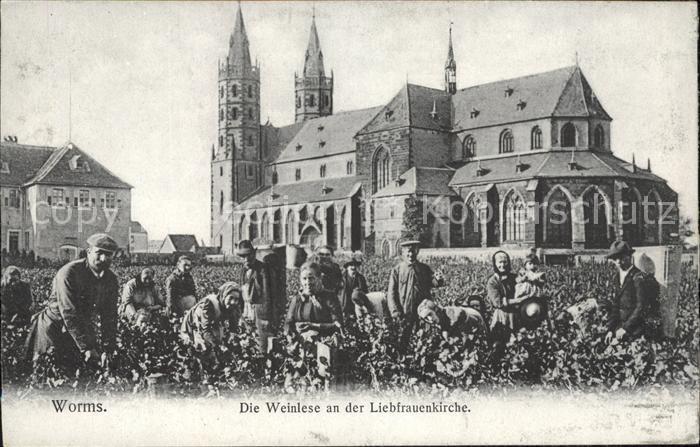 Worms Rhein Weinlese an der Liebfrauenkirche Kat. Worms