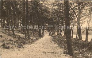 Zuidlaren Dennenbosch Waldpartie