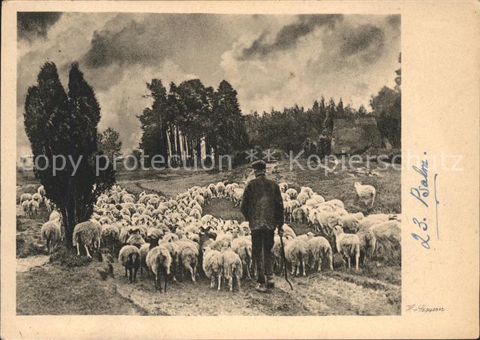 Kuenstlerkarte H. L. Psalm Schafe Schaefer Kat. Kuenstlerkarte