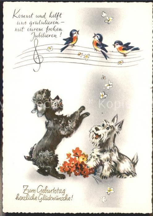 Geburtstag Hunde Voegel Kat Greetings Nr Hf41533 Oldthing