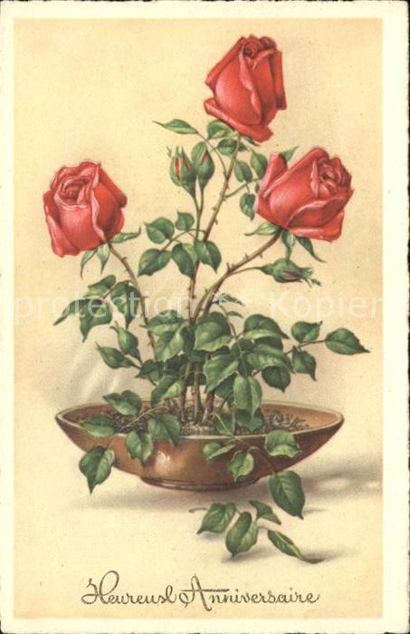Rosen Heureux Anniversaire Kat. Pflanzen
